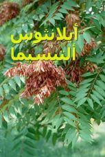 400px-Ailanthus_altissima_RJB